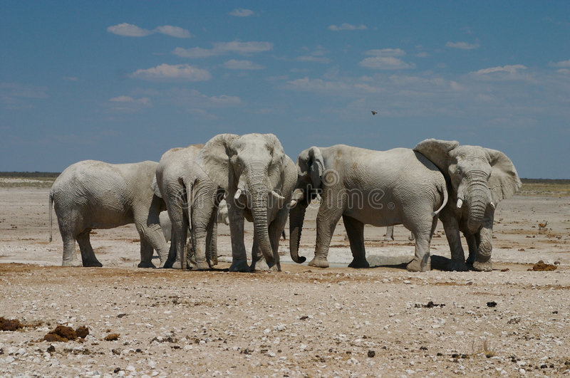 Elefants chez le Waterhole image stock