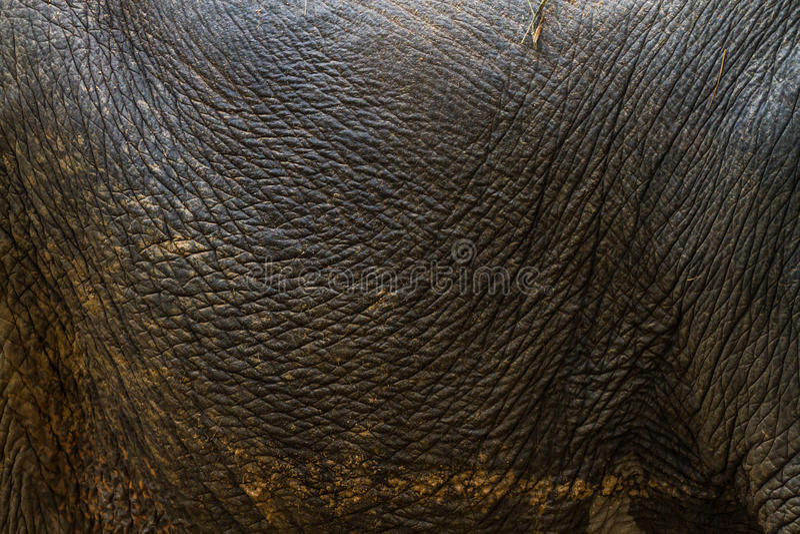 Elefants hud arkivbild