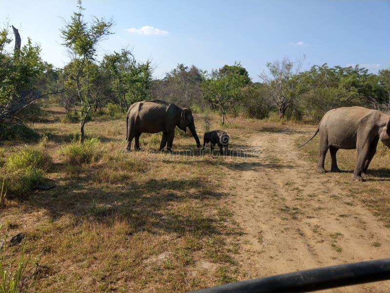 Elefants royalty-vrije stock afbeelding