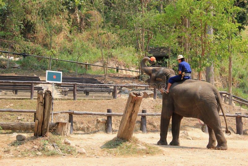 Elefantshow på det Maesa elefantlägret, Chiangmai, Thailand på April arkivbilder