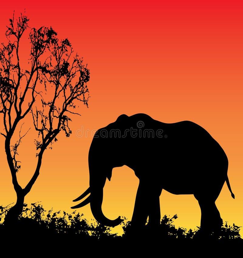 elefantsolnedgång royaltyfri illustrationer