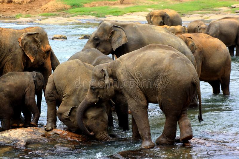 Elefantspiel miteinander stockfotos