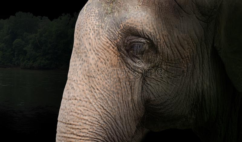 Elefantstängning med skogsbakgrund arkivfoto
