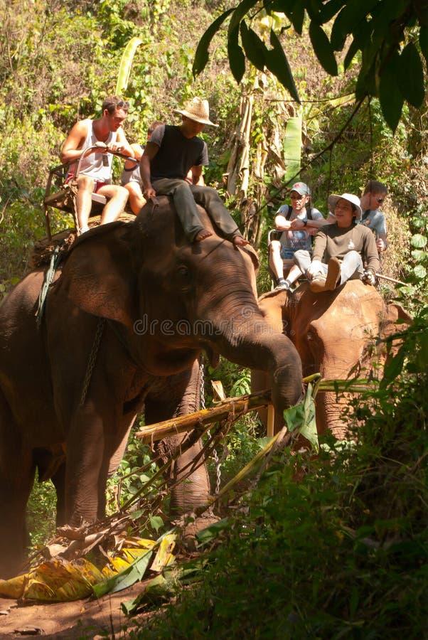Elefanttrekking lizenzfreie stockbilder