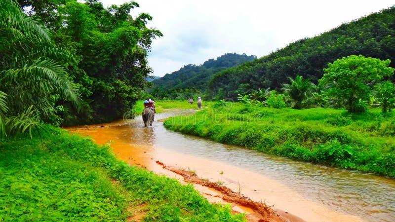 Elefanttrekking, Thailand Der Fluss und der Wald stockbilder