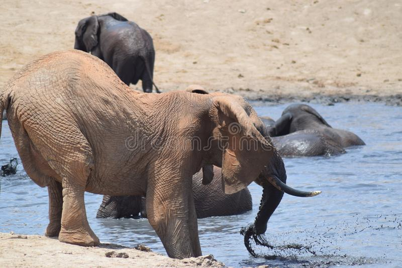 Elefantvattenhål arkivbilder