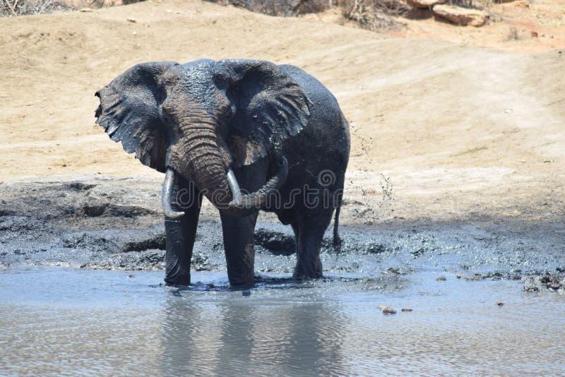 Elefantvattenhål arkivfoto
