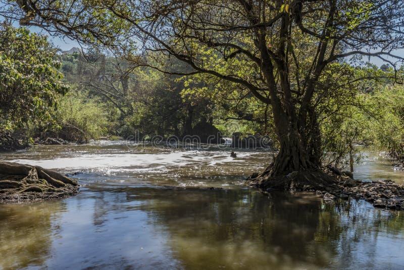 Elefantwasserfall am schönen sonnigen Tag lizenzfreies stockbild