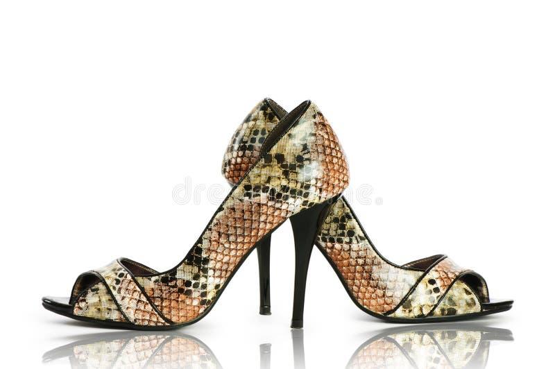 eleganccy buty zdjęcia stock
