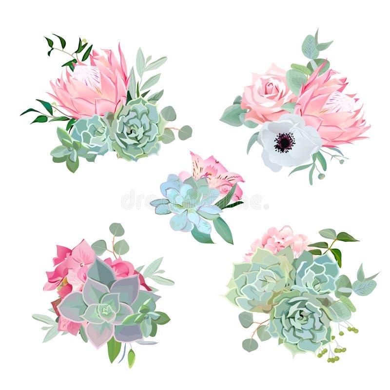 Eleganccy mali bukiety sukulenty, protea, wzrastali, anemon, echeveria, hortensja, zielone rośliny ilustracja wektor