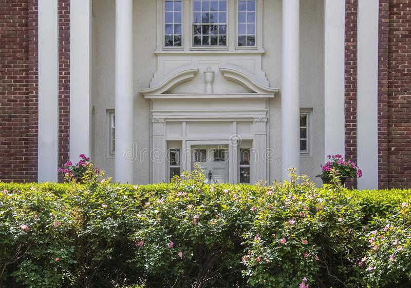 Elegancja - Rosebush żywopłot który potrzebuje naszywanego w pełnym słońcu przed śledzonym zamazanym ozdobnym wejściem ekskluzywn zdjęcie stock