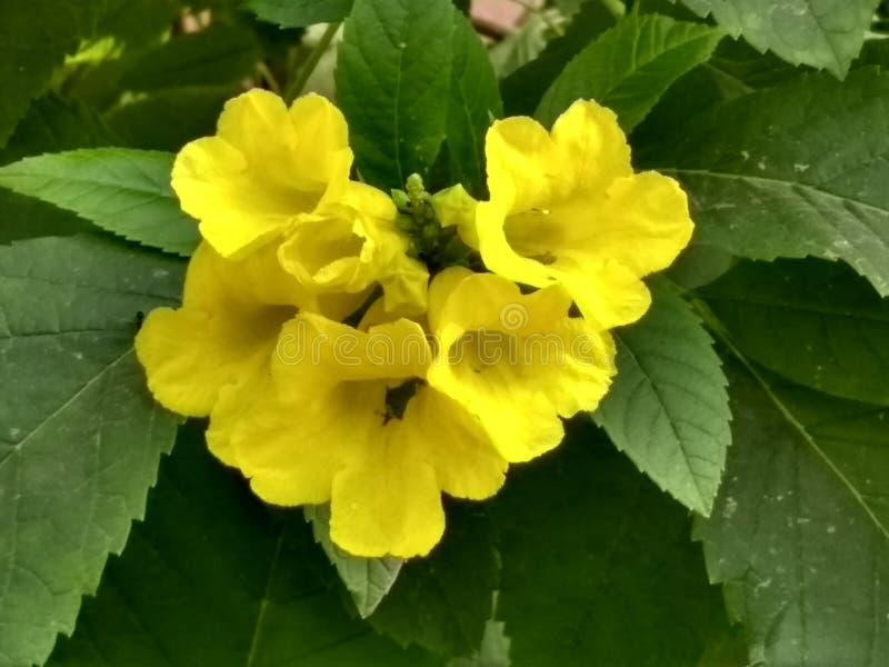 Elegancki kolor żółty kwitnie wiązkę fotografia stock