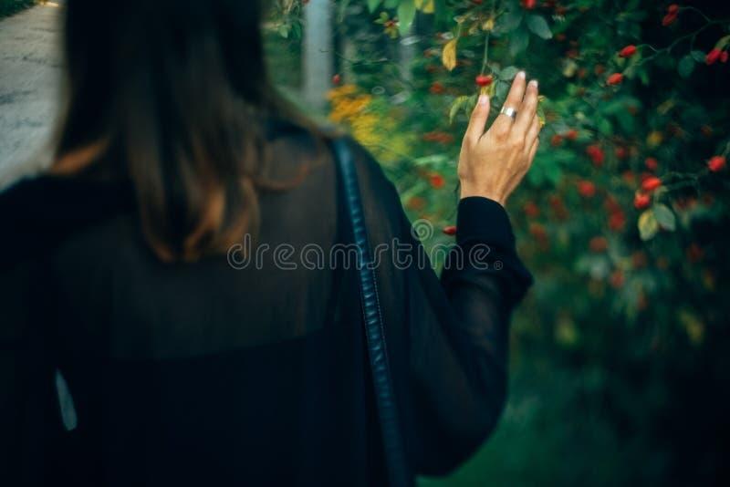Elegancki modni? dziewczyny odprowadzenie w pogodnym ?wietle w parku, atmosferyczny moment, tylny widok Modnej kobiety mienia gał zdjęcia stock