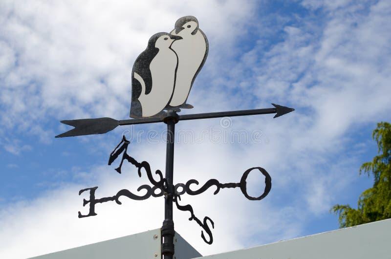 Elegancki pingwinu wskaźnik przeciw niebieskiemu niebu zdjęcia stock