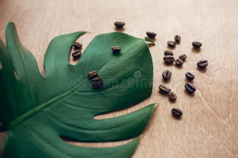 Elegancki wizerunek piec kawowe fasole na zielonym monstera liściu na nieociosanym drewnie w świetle Eco kawowe fasole pojęcie, r zdjęcia royalty free