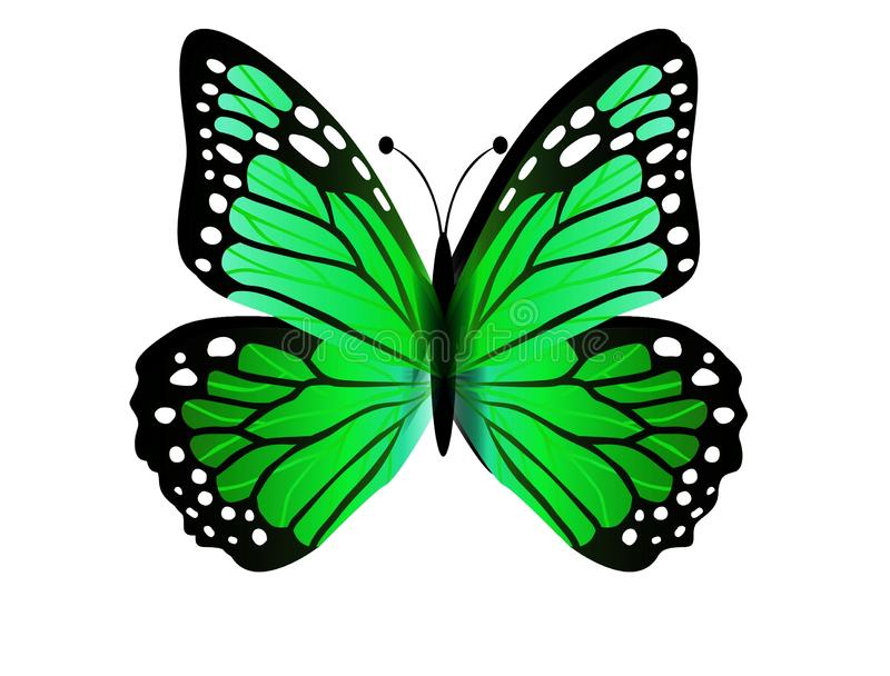 Elegant and beautiful butterfly isolated on white background. Illustration design stock photography