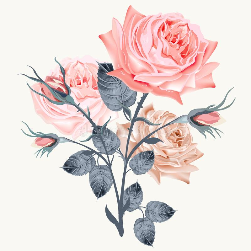 Elegant and beautiful vector pink rose isolated on white in vintage high detailed style stock illustration
