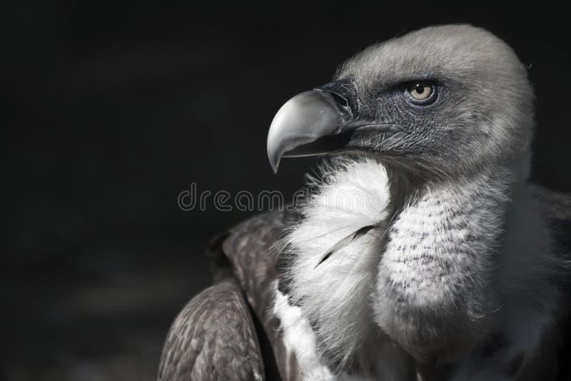 Download An elegant bird stock image. Image of beak, bird, animal - 21454329
