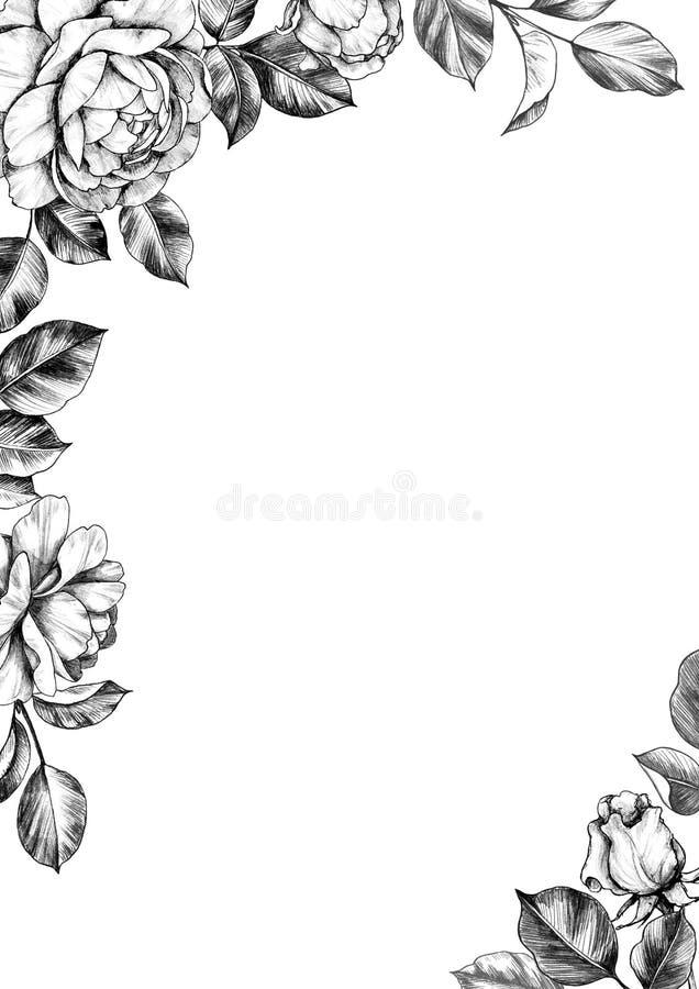 Elegant Border with Rose Flowers, Buds and Leaves. Black and white elegant border with hand drawn rose flower, buds and leaves. Pencil drawing monochrome floral stock illustration