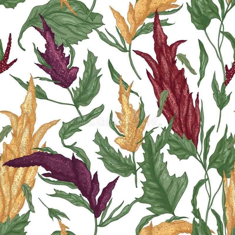 Elegant botanisk sömlös modell med quinoaväxter på vit bakgrund Bakgrund med skörden för häftklammermatkorn royaltyfri illustrationer