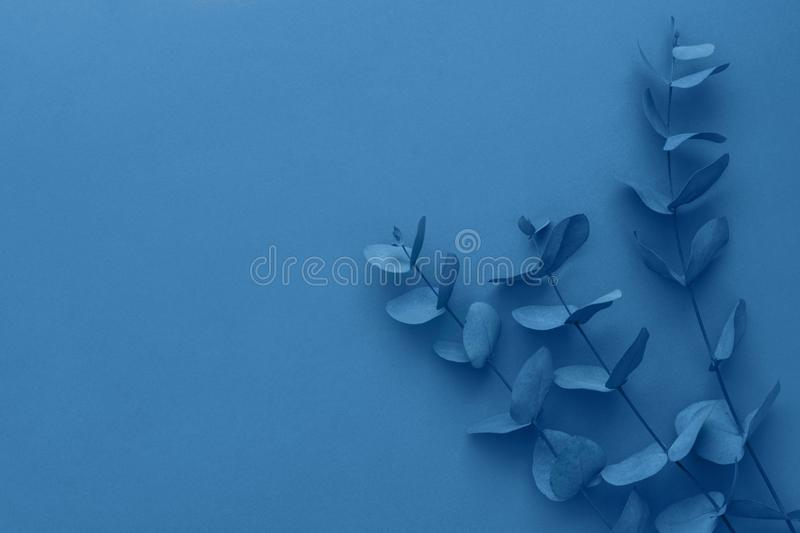 Elegant bouquet of branches twigs of dry silver dollar eucalyptus toned in trendy color of the year classic blue. Poster banner royalty free stock image