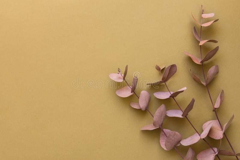 Elegant bouquet of branches twigs of dry silver dollar eucalyptus. Warm autumnal color palette of brown beige maroon pink colors stock photo