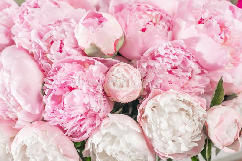 Elegant bouquet of a lot of peonies of pink color close up. Beautiful flower for any holiday. Lots of pretty and stock images