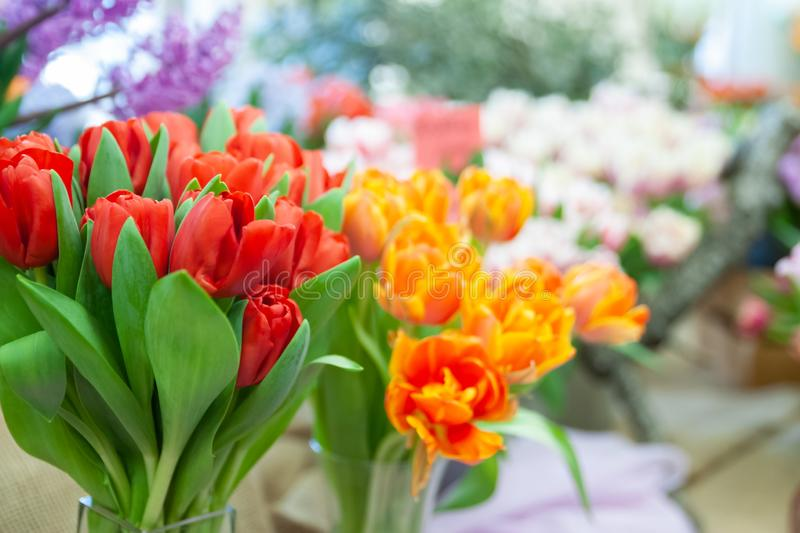 Elegant bouquets of red and orange tulips, the theme of spring and congratulations, royalty free stock photos