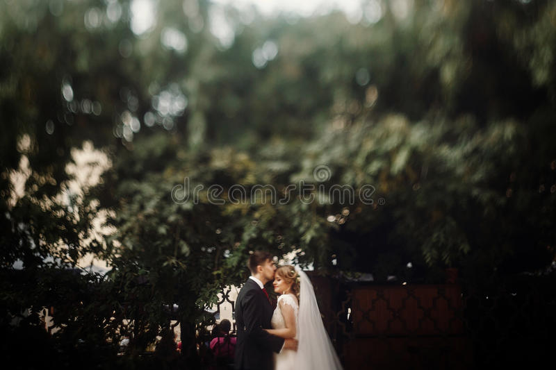 Handsome groom kissing beautiful blonde bride, newlywed couple hugging and kissing outdoors near trees after summer wedding stock photography