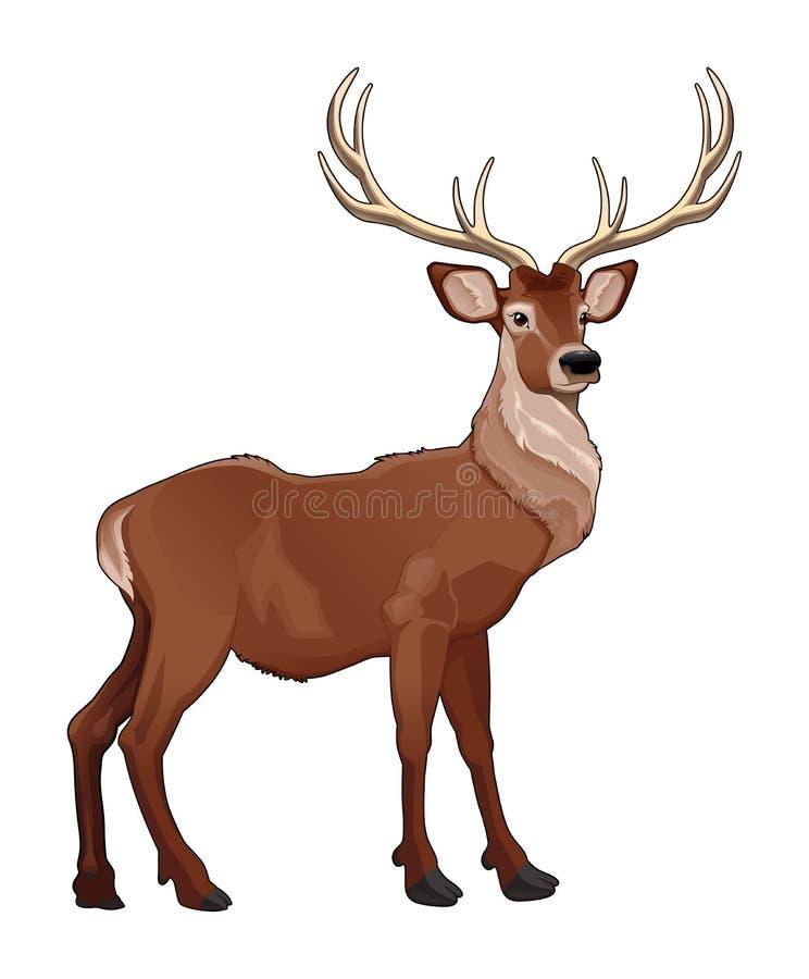 Elegant deer. royalty free illustration