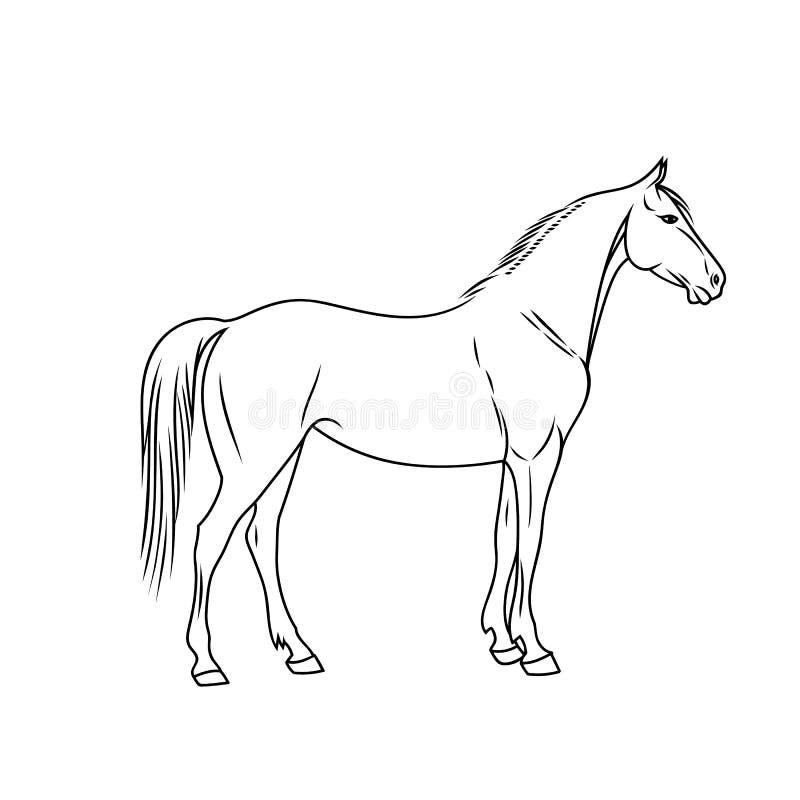 Elegant die paard in een minimale stijl wordt gedaan Vector illustratie stock illustratie