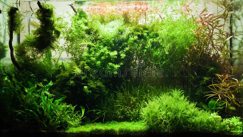 Elegant freshwater aquarium. With different plants and small fishs royalty free stock photography