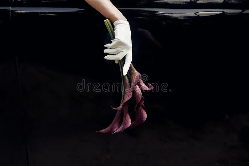 elegant gorgeous bride hand in silk glove holding wedding bouquet of callas on backgound of stylish luxury black car. unusual ad royalty free stock image