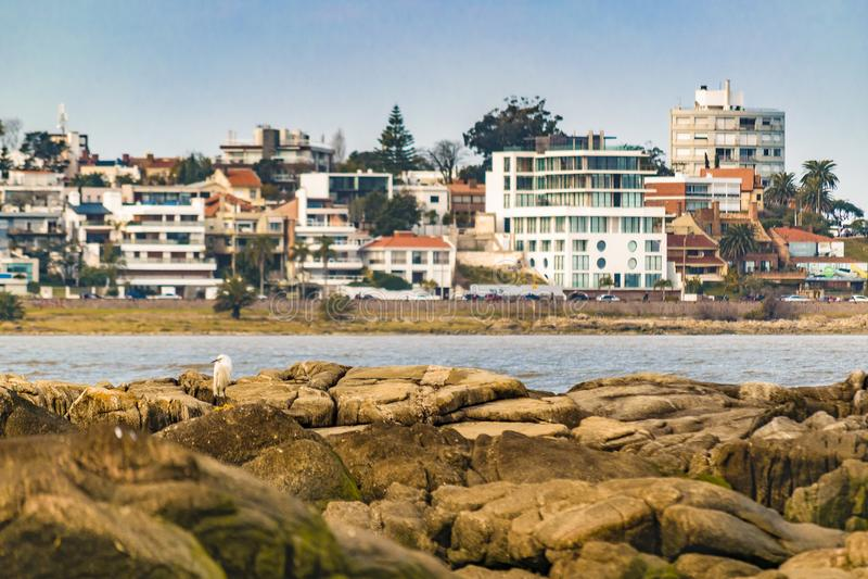 Elegant grannskap, Montevideo, Uruguay royaltyfria bilder