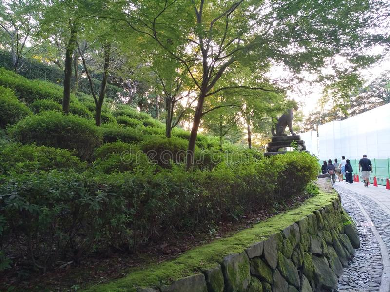 Elegant green bushes and trees in kyoto japan stock images