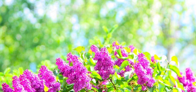 Elegant, härlig, gjord suddig blom- bakgrund royaltyfria bilder