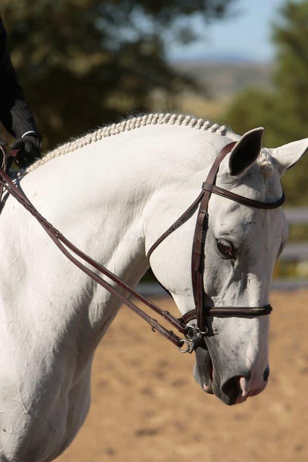 Elegant Horse Head stock images