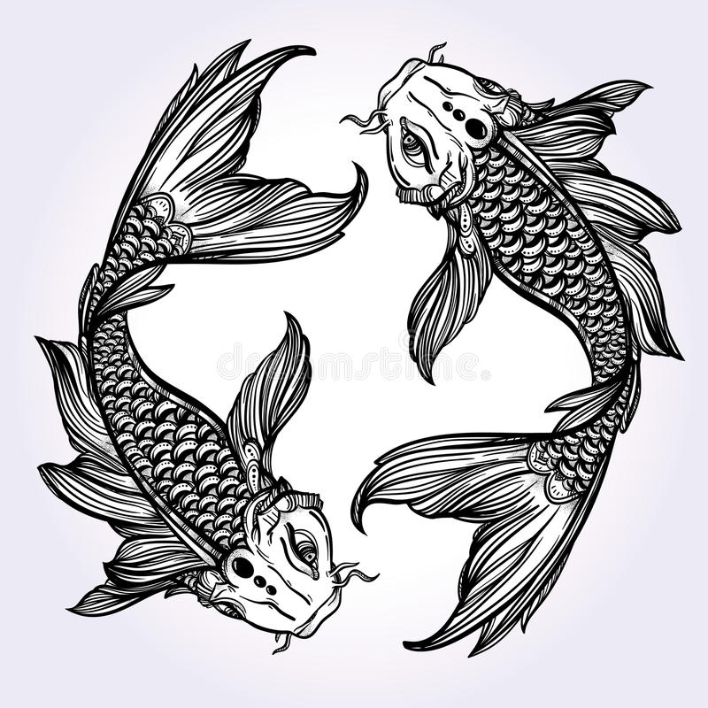 Line Art Vector Tutorial : Elegant koi carp fish illustration stock vector