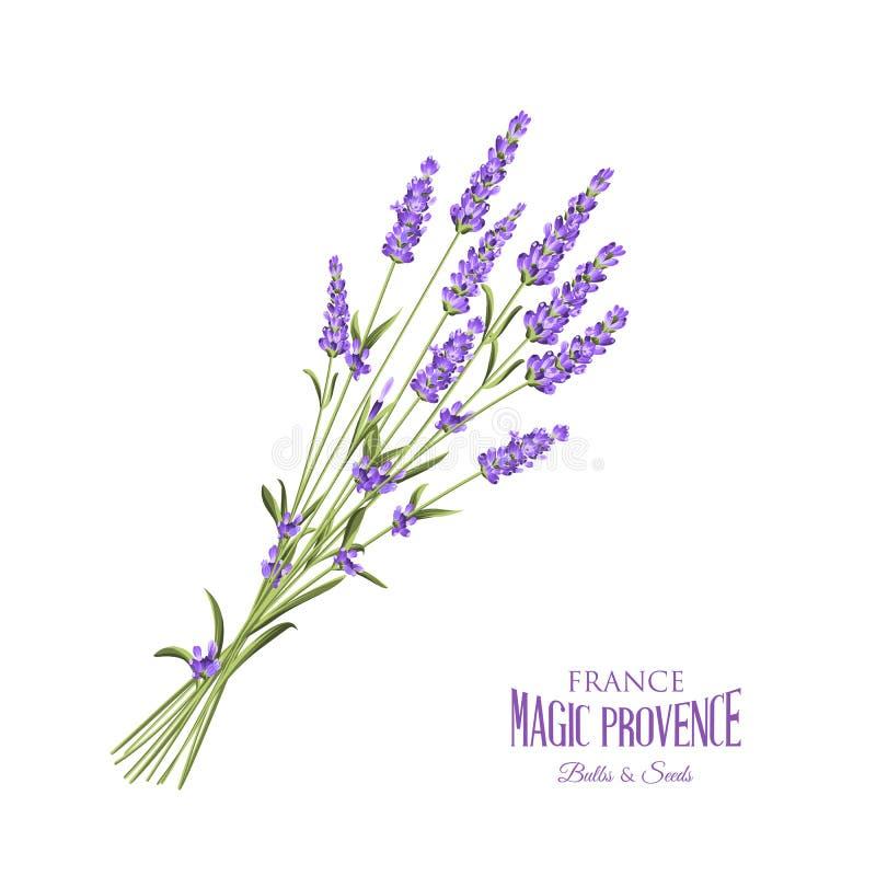 Elegant kort för lavendel stock illustrationer