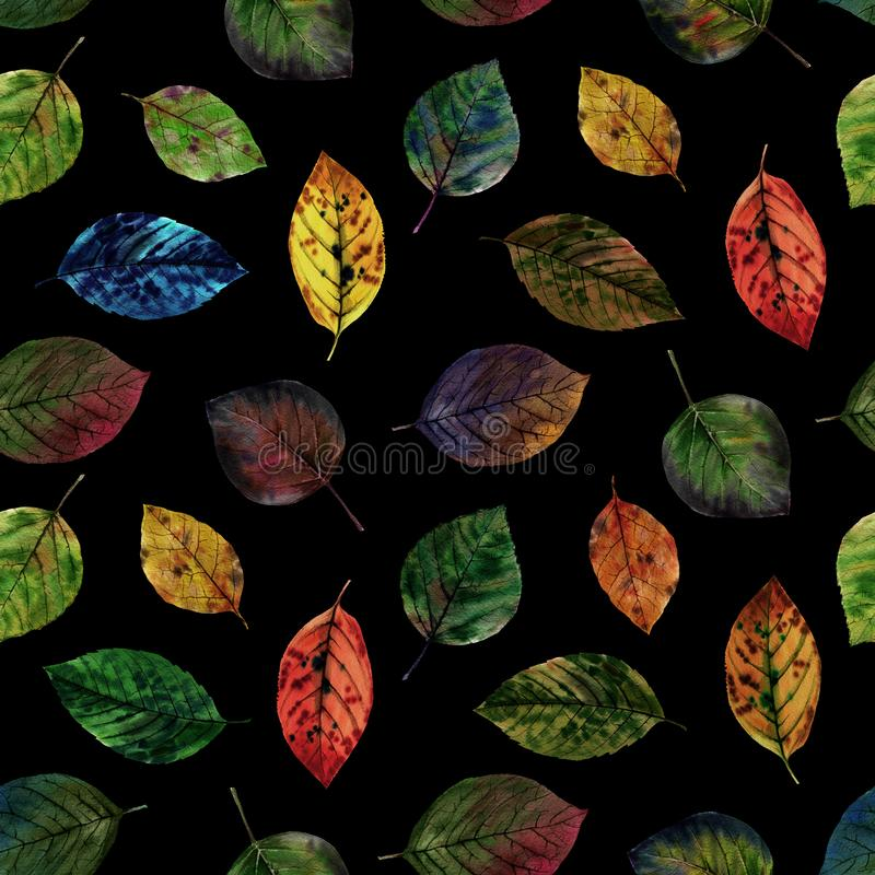 Elegant leaves for design. Colorful autumn leaves. Seamless pattern of leaves. royalty free stock photography