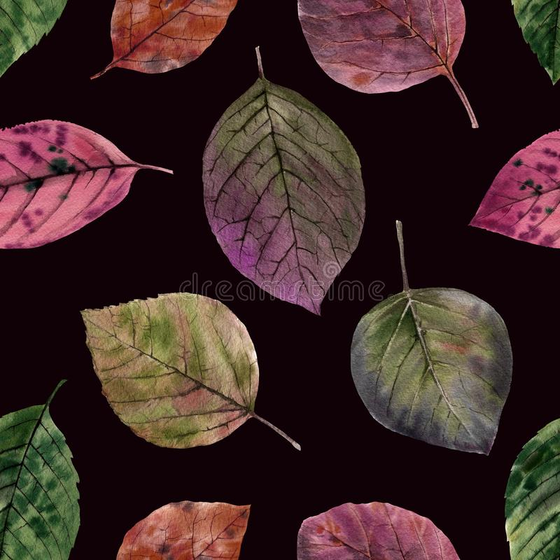 Elegant leaves for design. Colorful autumn leaves. royalty free stock photo