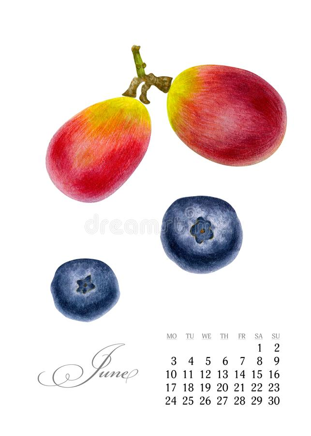 Elegant printable calendar 2019. June. Watercolor grapes, blueberries. Botanical art. Template for a banner, notebook stock images
