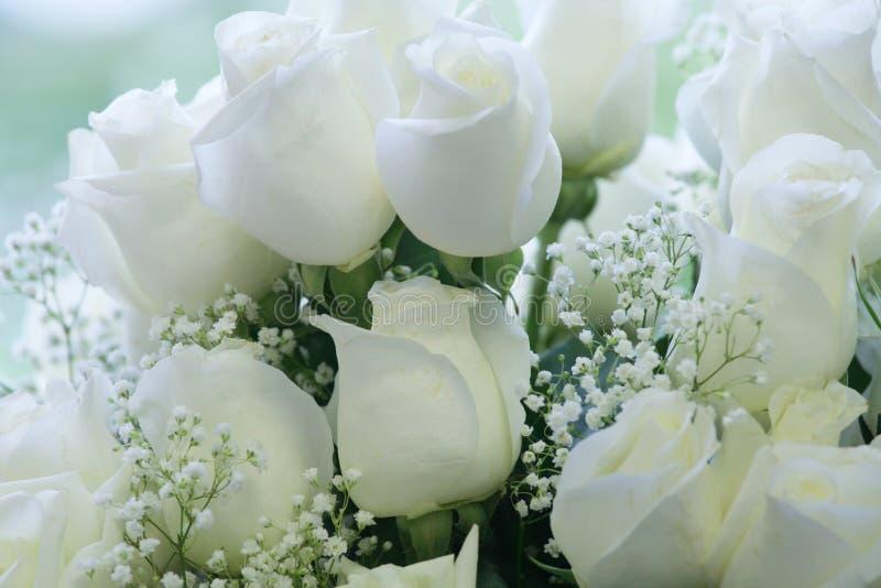 Elegant pure white roses royalty free stock photos