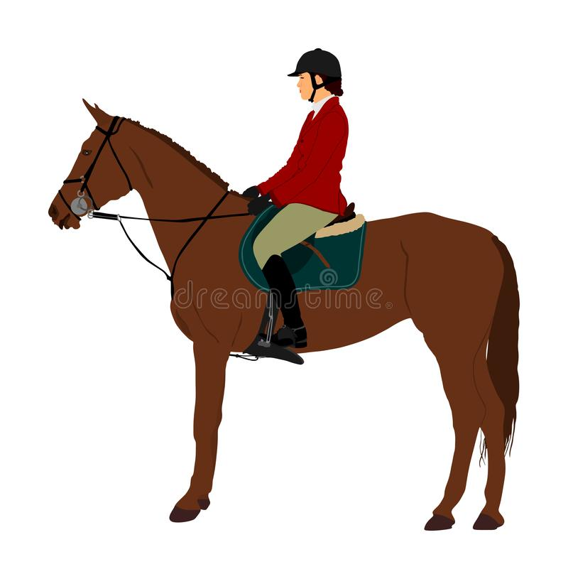 Elegant racing horse portrait vector illustration isolated on white background. Jockey lady riding horse. Hippodrome sport event. Entertainment gambling vector illustration
