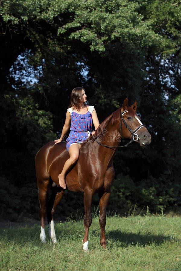 Elegant rid- barbacka ridninghäst arkivfoton