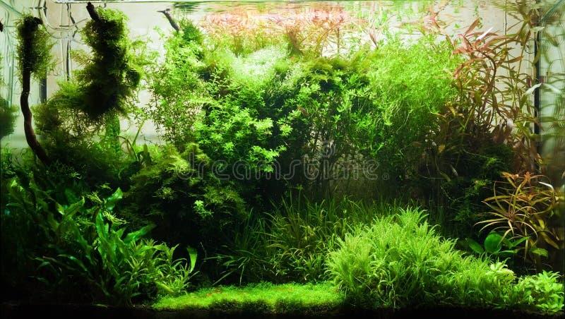 elegant sötvatten för akvarium royaltyfri fotografi