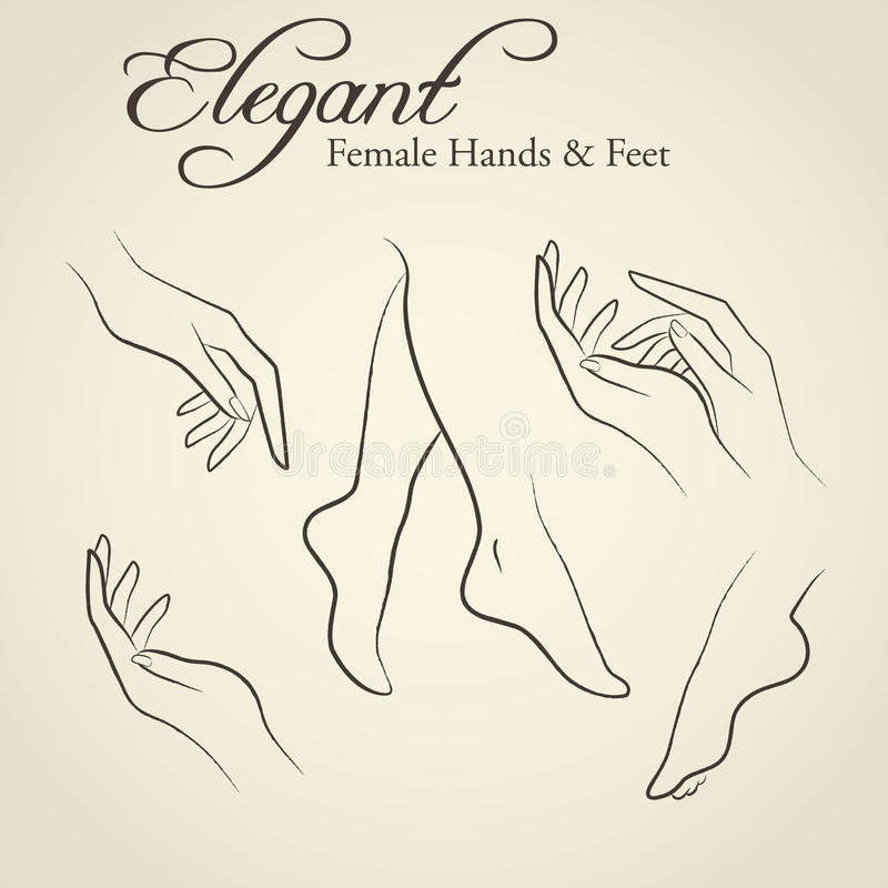 Elegant silhouettes of female hands and feet vector illustration