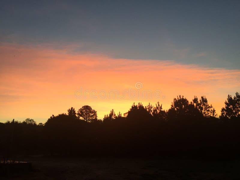 Elegant soluppgång över sörjer träd royaltyfri fotografi