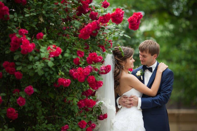 Elegant ursnygg lycklig brud och brudgum på bakgrunden av friaren royaltyfri fotografi