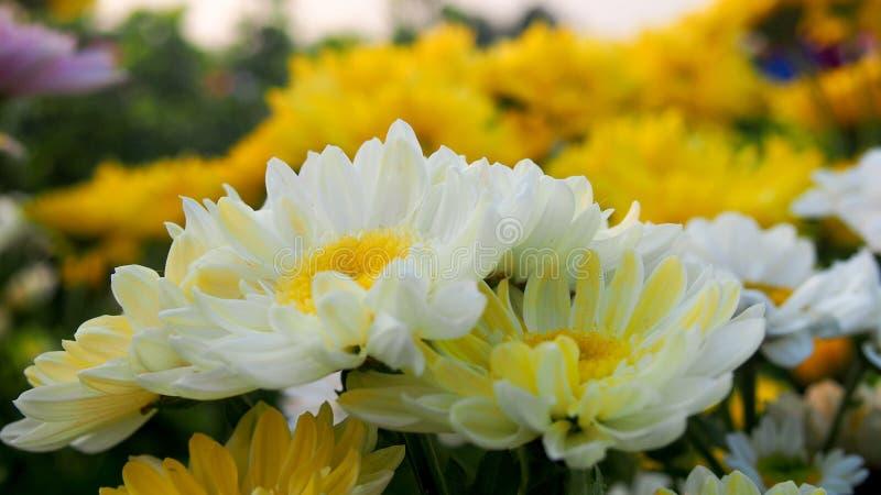 Elegant van witte bloem royalty-vrije stock foto